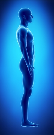 naked male body: Male figure in anatomical position lateral view