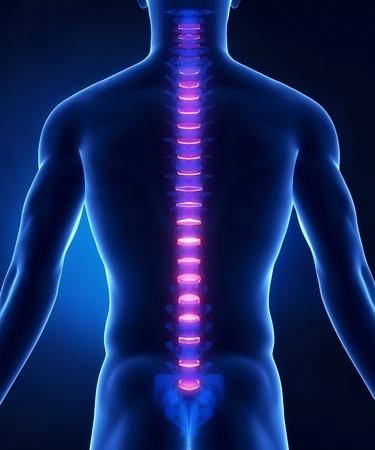 medula espinal: Backbone de la anatom�a del disco intervertebral vista posterior