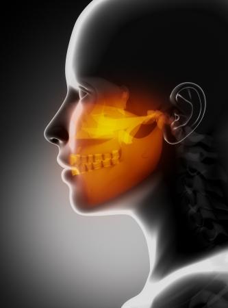 Maxillofacial concept x-ray jaws Stock Photo