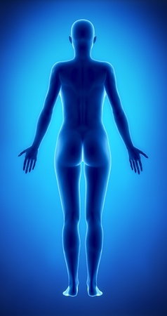 naked female: Female figure in anatomical position posterior  view