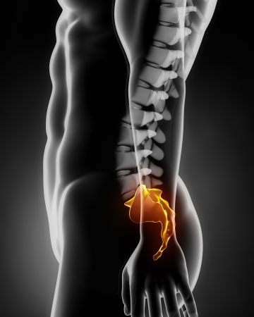 Sacral spine anatomy lateral view Stock Photo - 15095807