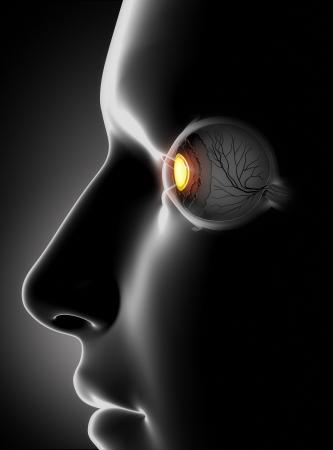 oculista: Rostro masculino con antomy ojo humano