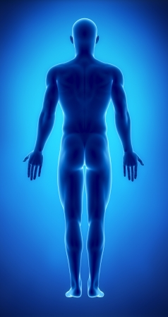 naked male: Male figure in anatomical position posterior  view