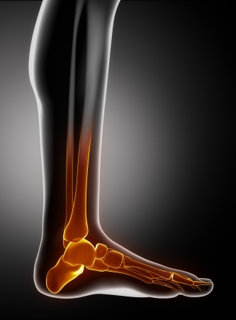 Pies huesos anatyomy dedos de los pies con vista lateral Foto de archivo