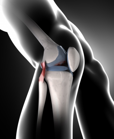 Knee, Anatomy, Bone, Medical, Tibia, Fibula, Femur, Patella,.. Stock ...