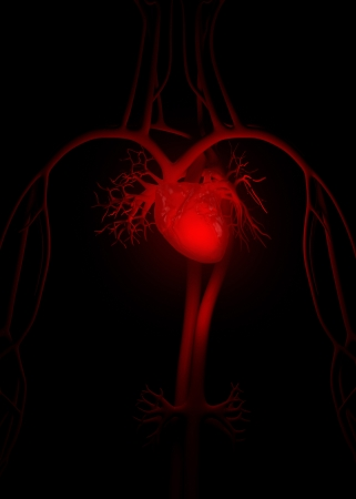 pulmonary trunk: Red heart anatomy Stock Photo
