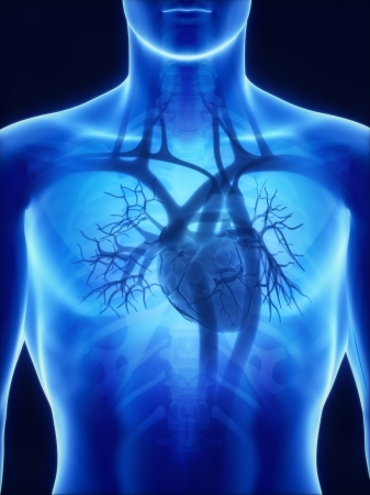 pulmonary trunk: X-ray heart anatomy Stock Photo