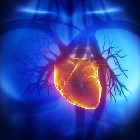ventricle: Human herat glowing in chest Stock Photo