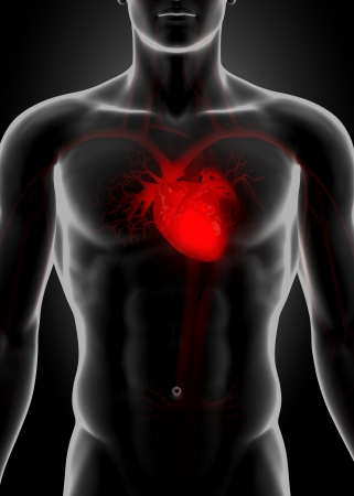 vena: Red heart in chest