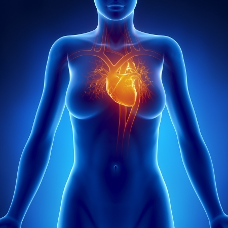 organos internos: Mujer anatomía del corazón que brilla intensamente