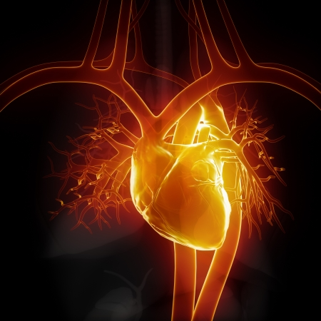 cardiac care: Glowing heart with internal organs