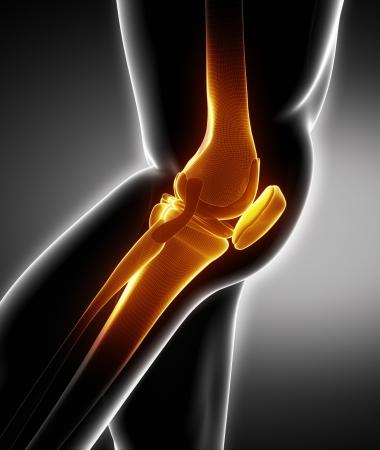 lateral: Anatom�a humana hueso de la rodilla izquierda Vista lateral Foto de archivo