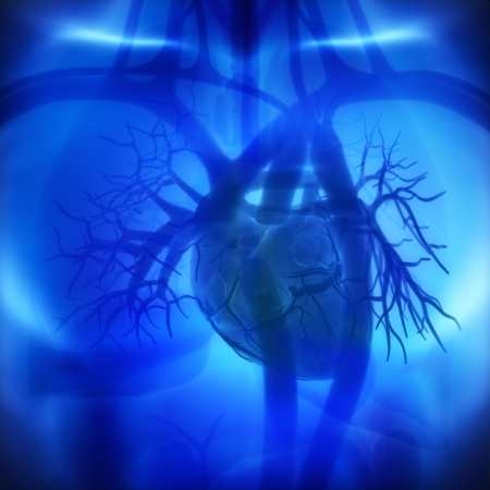 arteries: Coronary arteries, auricles, ventricles in human heart Stock Photo