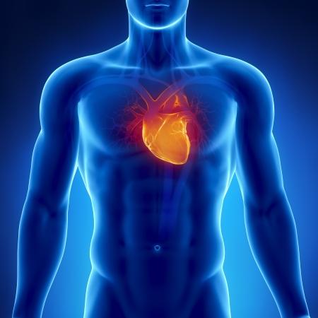 organos internos: Corazón que brilla intensamente en el pecho masculino Foto de archivo