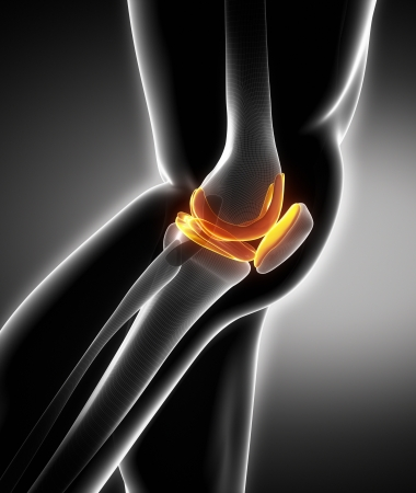 de rodillas: rodilla humana vista lateral anatomía