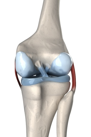 Anterior and posterior cruciate ligament anatomy Stock fotó