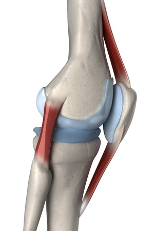 ligament: Right lateral knee anatomy Stock Photo