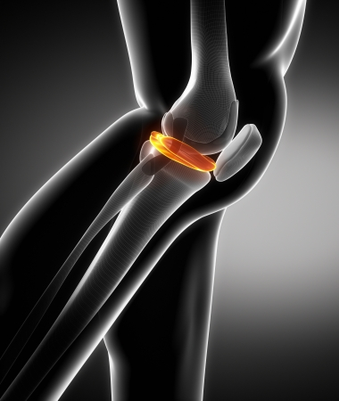Knie, Anatomie, Knochen, Medizin, Schienbein, Wadenbein, Femur ...