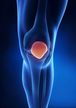 patella: Knee patella anatomy anerior view