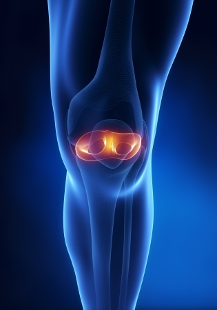 anterior: Knee meniscus anatomy anterior view Stock Photo