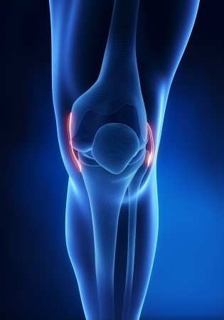 Knee ligament anatomy anterior view photo
