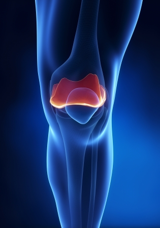 Articular cartilage anatomy Stock Photo - 15563848