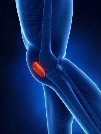 Patella knee anatomy lateral view Stock Photo - 15563944