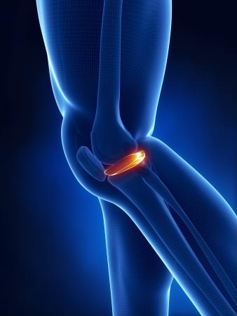ligament: Knee anterior view anatomy cartoon view