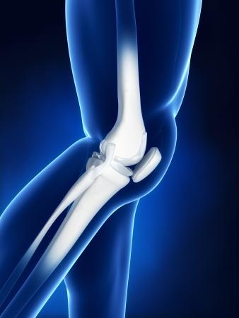 de rodillas: Anatom�a �sea de rodilla