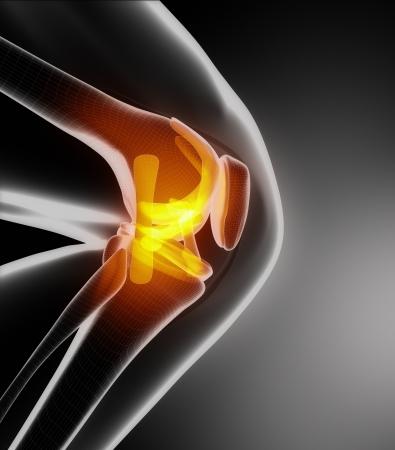 Knieanatomie Seitenansicht