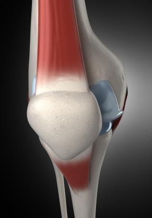 Geïsoleerde Menselijke Knie Anatomie Zijaanzicht Royalty-Vrije Foto ...