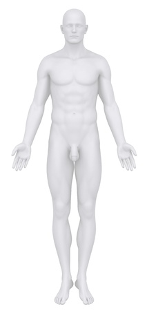 Male body in anatomical position anterior
