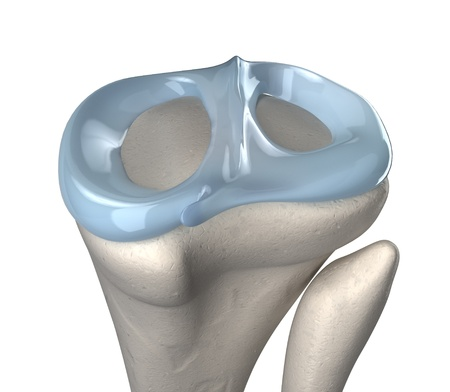 knee cap: Knee meniscus anatomy