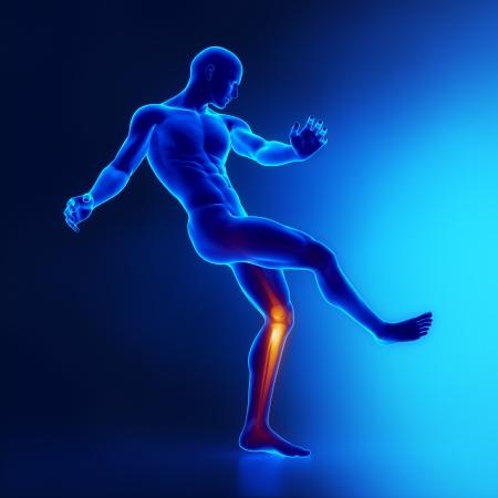 x sport: Knee joints sportsman anatomy