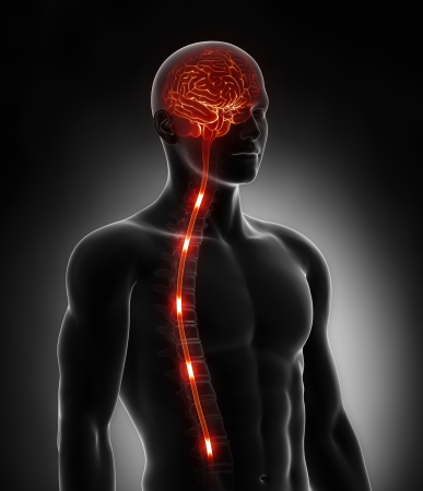 Spinal cord nerve energy impulses into brain photo