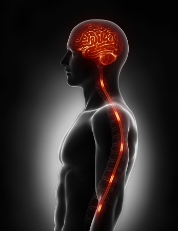 stimulate: Spinal cord nerve energy impulses into brain