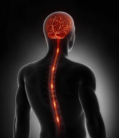 zenuwcel: Ruggenmerg zenuw energie impulsen in de hersenen Stockfoto