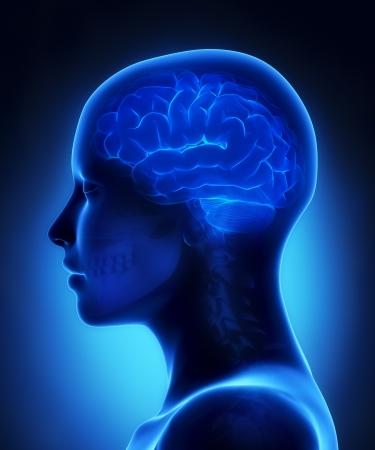 Brain x-ray view Stock fotó - 19006215