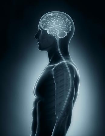 脳と脊髄の医療用 x 線スキャン