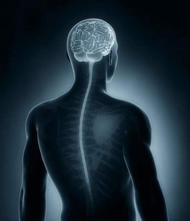 brainpan: Brain and spinal cord medical x-ray scan