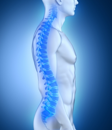男性の脊椎の解剖学の側面図 写真素材