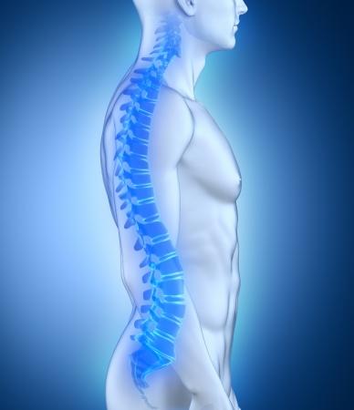 colonna vertebrale: Maschio spina dorsale anatomia vista laterale Archivio Fotografico