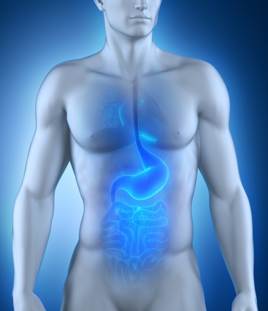 stomach pain: Digestive organ anatomy