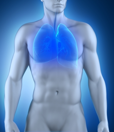 transparent system: Respiratory system anatomy Stock Photo