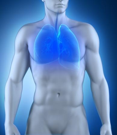 respiratory system: Respiratory system anatomy Stock Photo