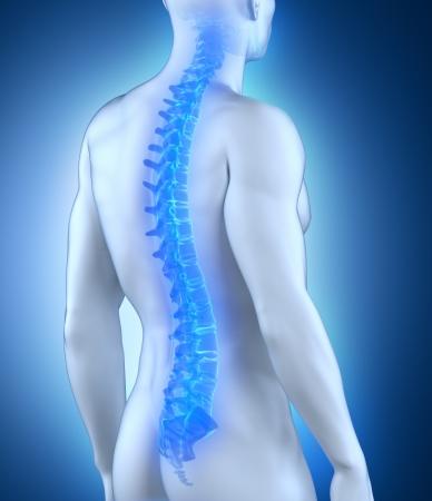 spina dorsale: Anatomia della colonna vertebrale umana Archivio Fotografico
