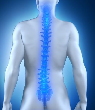adult bones: Human spine anatomy posterior view Stock Photo
