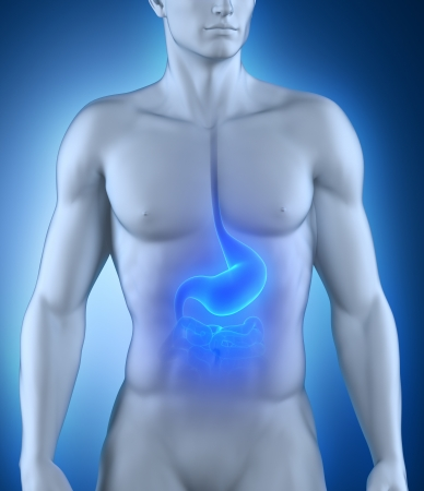 stomach ache: Male stomach anatomy