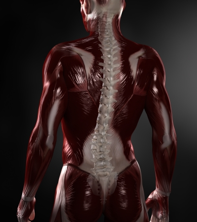 Naked man with visible muscles and spine photo