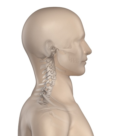 cervicales: Columna cifótica en fase región cervical 1